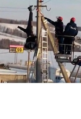 Unconscious Workman left dangling from an electricity pylon for more than an hour!